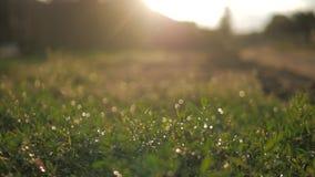 daggdroppar gräs green arkivfilmer