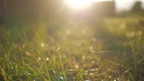 daggdroppar gräs green lager videofilmer