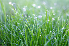 daggdroppar gräs green Royaltyfri Foto