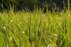 daggdroppar gräs green naturlig sommarwallpaper för abstrakt morgon Arkivbild