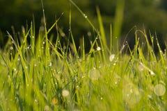 daggdroppar gräs green naturlig sommarwallpaper för abstrakt morgon Arkivbilder