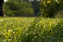 daggdroppar gräs green naturlig sommarwallpaper för abstrakt morgon Arkivfoton