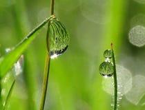 daggdroppar gräs morgon Fotografering för Bildbyråer
