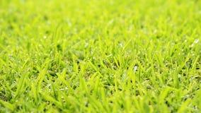 Daggdroppar i gräs lager videofilmer