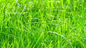 Daggdroppar i ljus på grönt gräs Skjutit med glidaren arkivfilmer