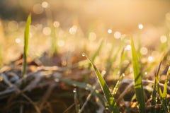 Daggdroppar på blad av nytt gräs, morgonstrålar av solen arkivfoto