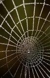 Daggdroppar på en spindelrengöringsduk Royaltyfri Foto