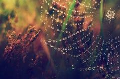 Daggdroppar på en spindelrengöringsduk i gräset arkivfoton