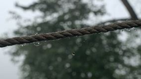 Daggdroppar på ett rep stock video
