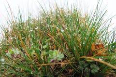 Daggdroppar på gräs arkivbilder