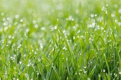Daggdroppar på gräs Royaltyfri Foto