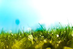 Daggdroppar på gräs i morgonsolen fotografering för bildbyråer