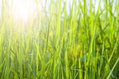 Daggdroppar på ljust - grönt gräs arkivbilder