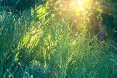 Daggdroppar på nytt grönt gräs i närbild Fotografering för Bildbyråer