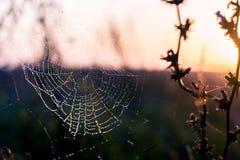 Daggdroppar på spindelrengöringsduken Royaltyfria Bilder