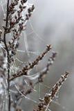 Daggdroppar på spindelspindelnät Arkivfoto
