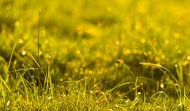 Dagget i solskenet Royaltyfria Foton