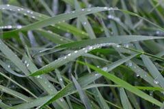 Dagget på gräset Arkivbild