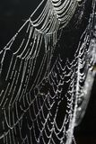 daggig spiderweb Royaltyfri Fotografi