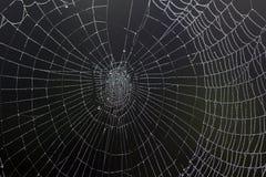 daggig spindelrengöringsduk Royaltyfri Bild