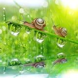 daggiga grässnails Arkivfoton