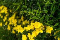 Daggiga nattljus i blomsterrabatten i den dekorativa trädgården i en regnig dag Royaltyfri Bild
