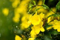Daggiga nattljus i blomsterrabatten i den dekorativa trädgården i en regnig dag Royaltyfri Fotografi