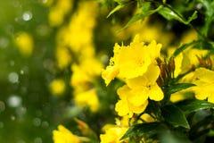 Daggiga nattljus i blomsterrabatten i den dekorativa trädgården i en regnig dag Arkivfoto