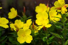 Daggiga nattljus i blomsterrabatten i den dekorativa trädgården i en regnig dag Arkivbild