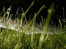 daggigt gräs Arkivfoton