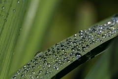 Daggsmå droppar överst av ett grönt blad Royaltyfria Bilder