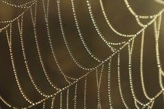 Daggspindelnät Morgonljus reflekterar i spindelrengöringsduk royaltyfri foto