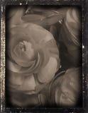 dagguereotype repro婚礼 图库摄影