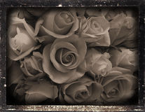 Dagguereotype repro 'roses'. Daguereotype reproduction of a vintage interior, Daguerreotype Photography was very popular between 1839 to 1855, images were Royalty Free Stock Image