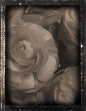 Dagguereotype repro 'wedding'. Daguereotype reproduction of a vintage interior, Daguerreotype Photography was very popular between 1839 to 1855, images were Stock Photography