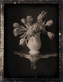 dagguereotypelivstid fortfarande Fotografering för Bildbyråer