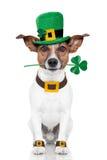 Daghund för St. patricks Royaltyfri Fotografi