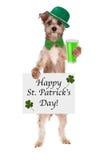 Daghund för St Patricks med öl Arkivfoton
