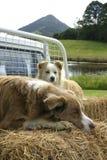 daghundar ut Royaltyfria Foton