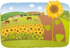 daglantgården fields den soliga små solrosen Royaltyfria Foton