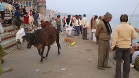 Dagligt liv i ett Ganges River Ghat arkivfilmer