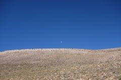 Dagmaan - het Noorden van Argentinië/noa, jujuy salta, royalty-vrije stock foto's