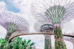 Dagmening van het Supertree-Bosje bij Tuinen door de Baai, die 101 hectaren, en vijf-minieme gang van Bayfront-MRT Post overspann royalty-vrije stock afbeeldingen