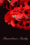 dagminne Royaltyfria Bilder