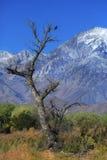 Dagnaturen specificerar soluppgång i toppiga bergskedjan berg Californa Fotografering för Bildbyråer