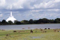 Dagoba y lago Fotos de archivo