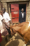 Dagoretti slaughterhouse in Nairobi, Kenya, Africa a holding tank for cows to be killed in slaughterhouse Stock Images