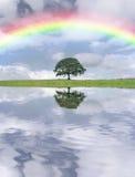 dagregnbåge Arkivbild