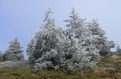 dagrimfrost november Arkivbild