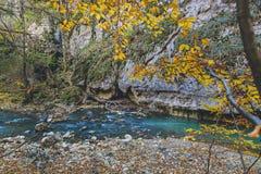 Dagsljus för förkylning för vatten för höstskogträd härligt nytt grönt royaltyfria foton